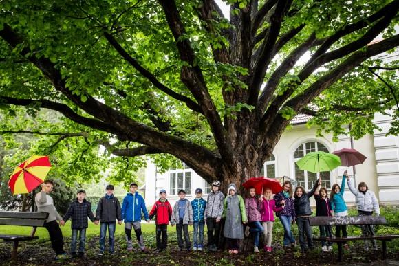 obrázek strom roku 2015